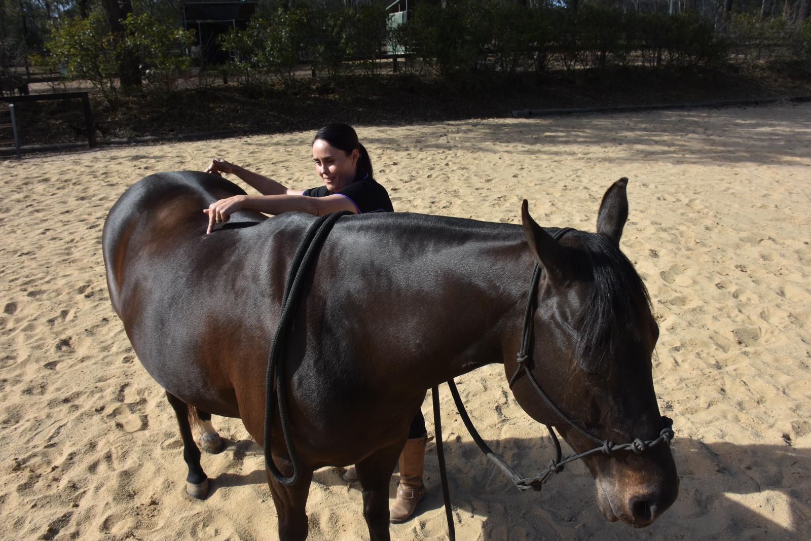 Emmett4horses